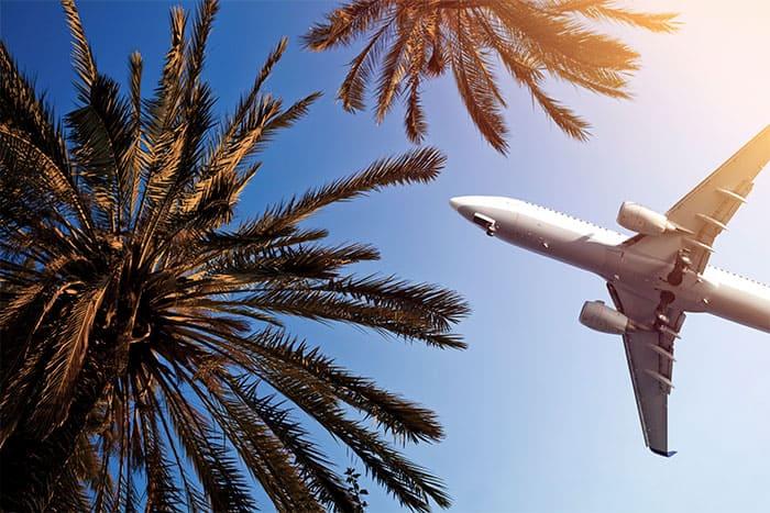 Flugzeug fliegt über Palmen.
